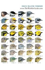 Warblers Quick Reference